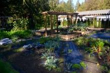 Auntie Joanne's Garden in Langley BC
